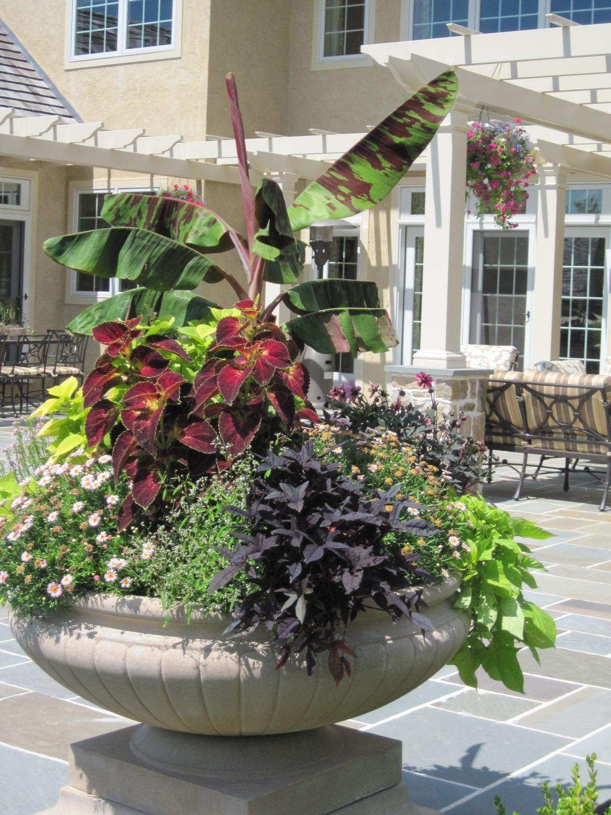 Foliage plants for containers images - Tropical container garden ...