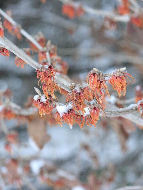 beautiful_snow