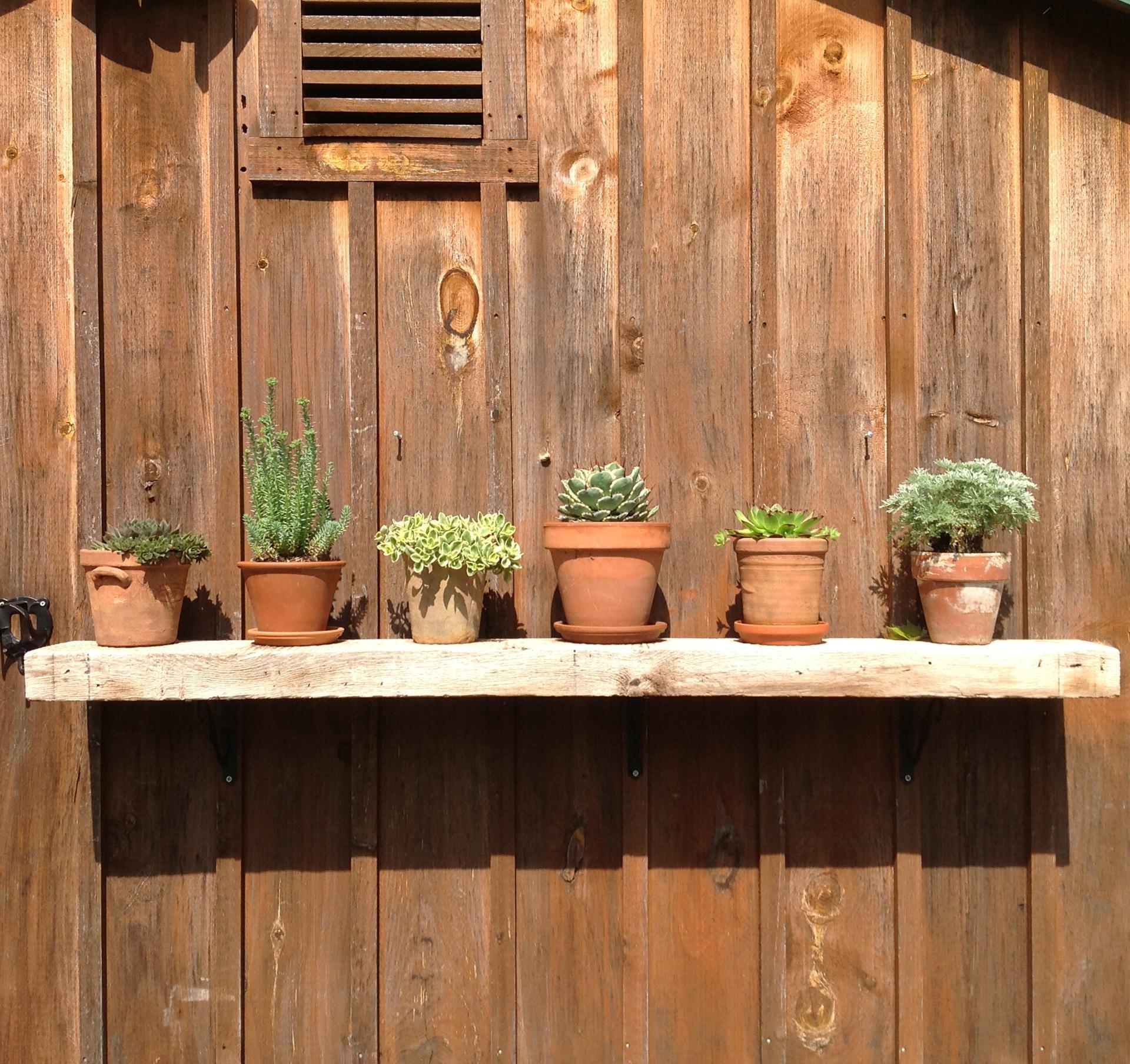 edible-garden-container-garden-grow-herbs-flower-pot