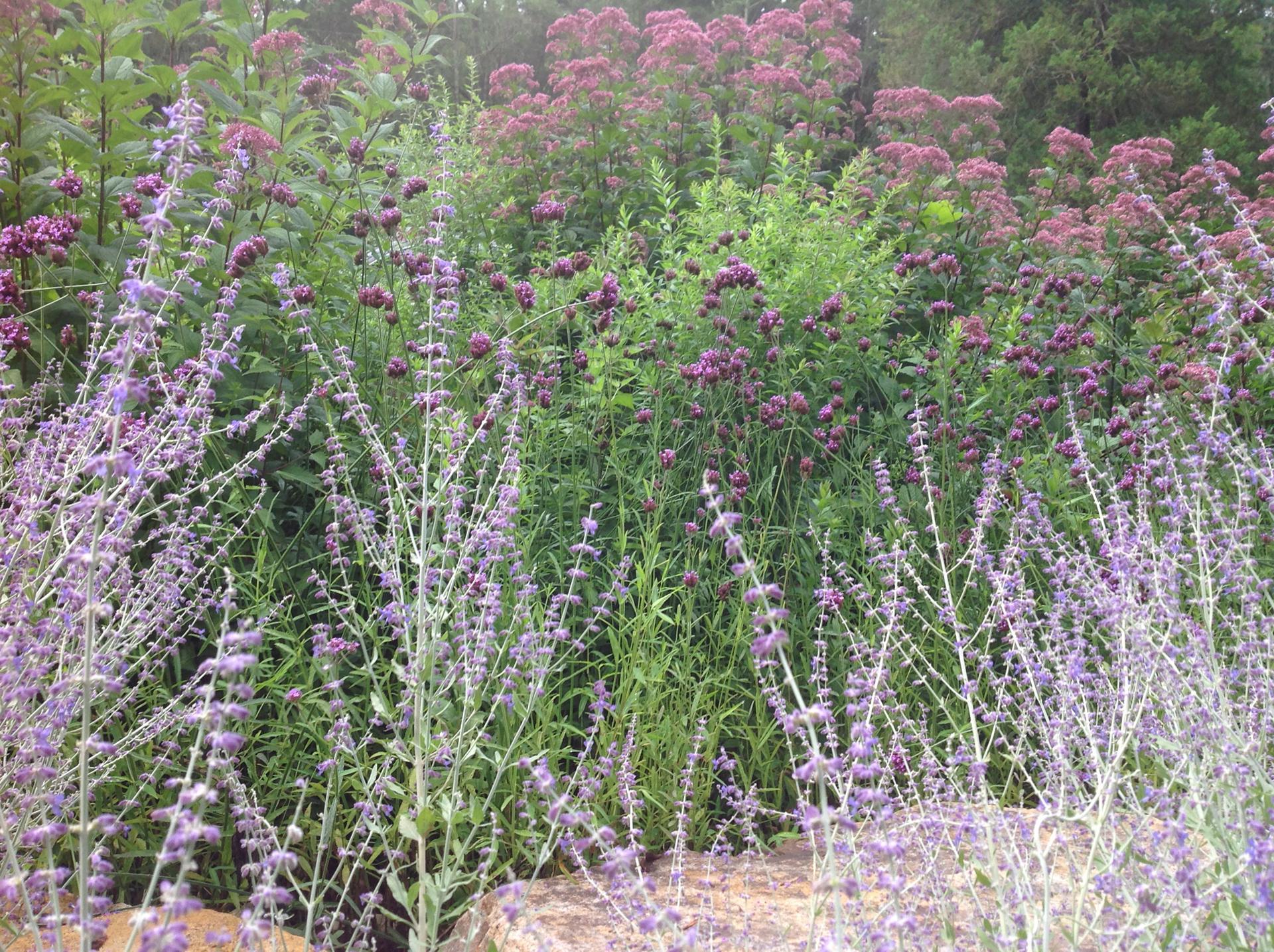 garden-color-perennial-garden-design-main-line-landscape-design