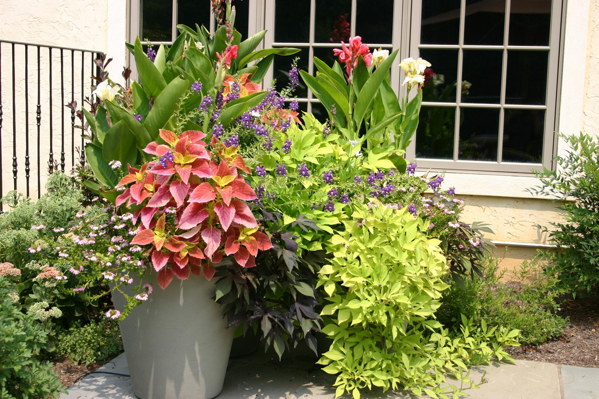 flower-pot-container-garden-design-patio-flowers-chadds-ford-pa